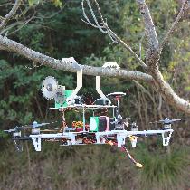 aerialpruning